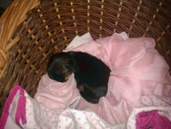 Mon nouveau bébé chien
