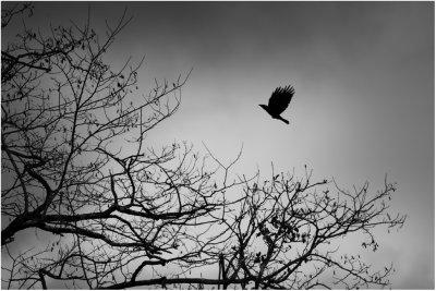 Confessions d'un aigle