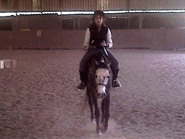 Les chevaux ; plus qu'une simple passion..