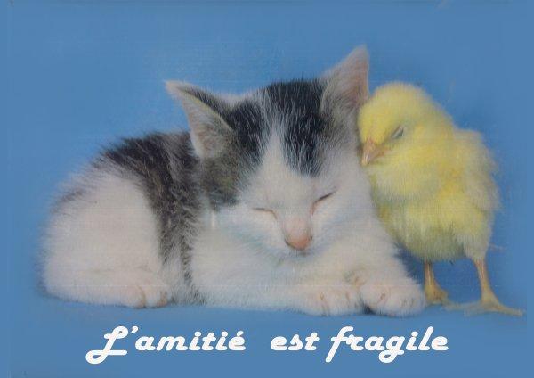 L'amitie est fragile