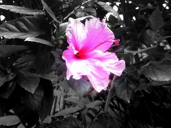 Photographizzer.. une fleur.