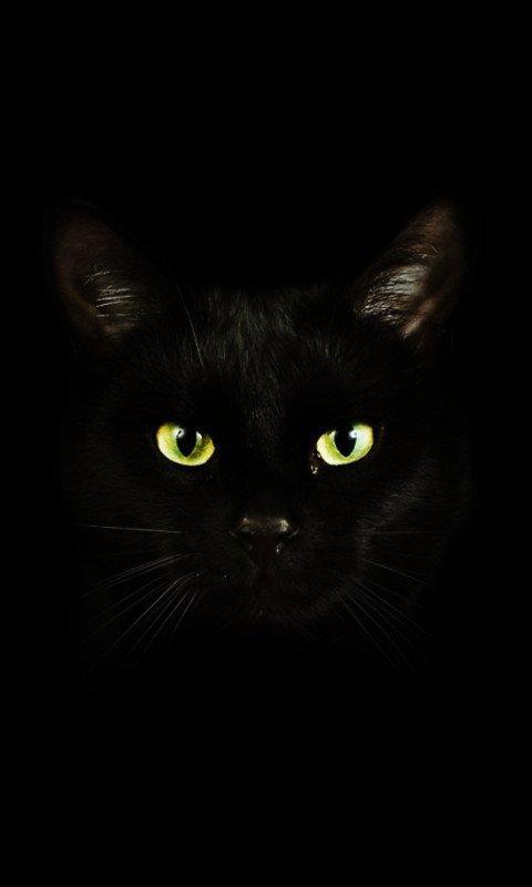 chat noir qui fait peur