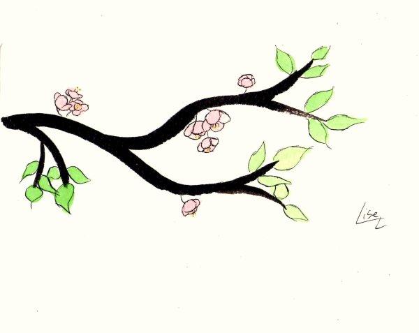 Fleurs de cerisier blog de dessin reve - Dessin fleur de cerisier ...