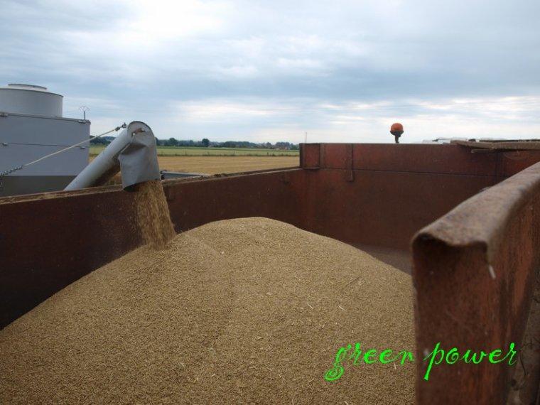 moisson 2014 chantier n°6 champs d'essais