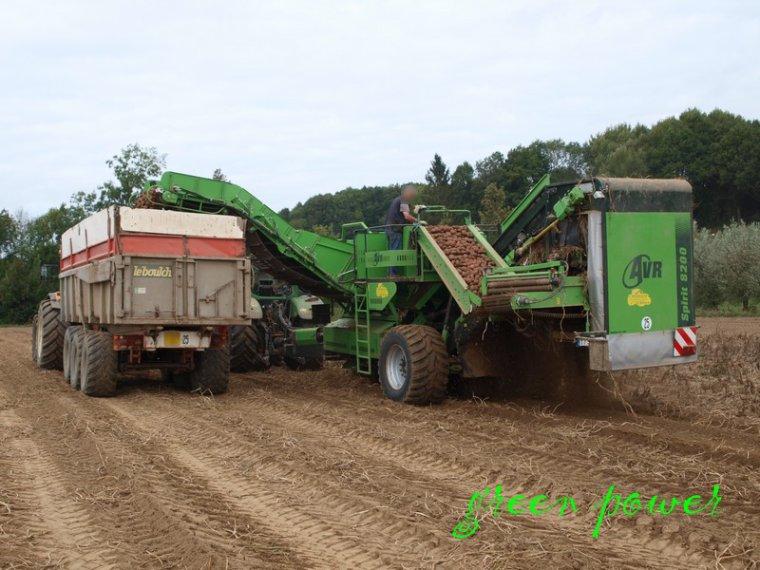 patates 2014 chantier N°8