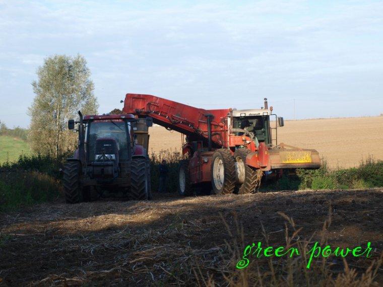 patates 2014 chantier n°10