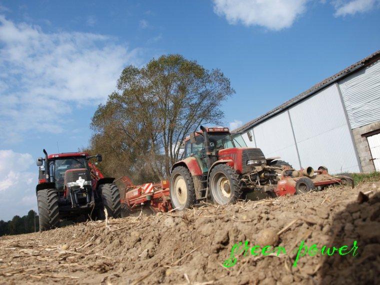 patates 2014 chantier N°12