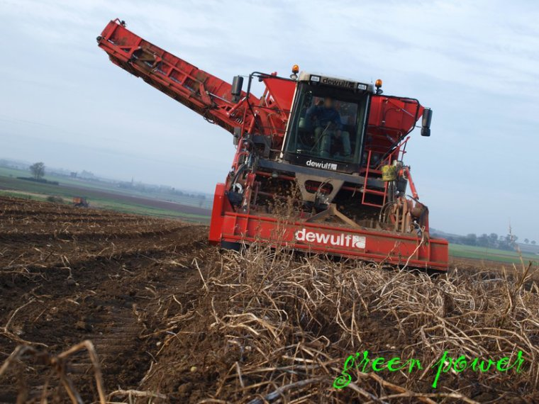patates 2014 chantier n°14