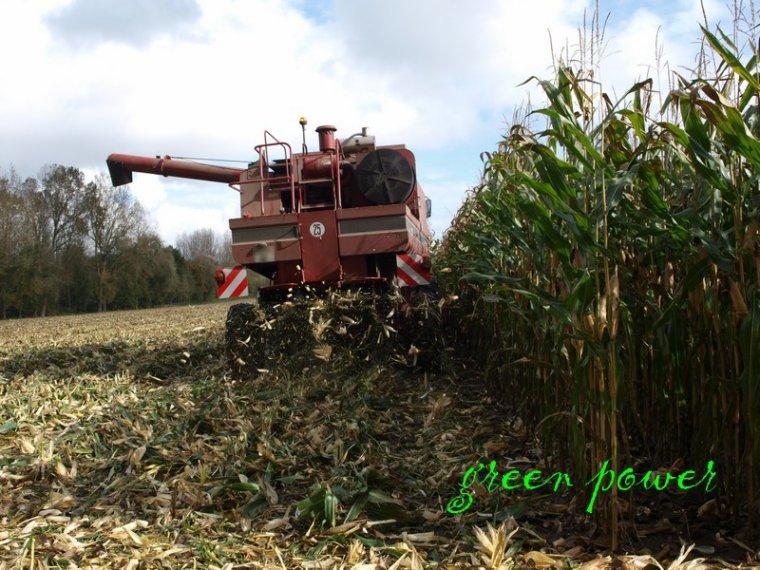 mais grain 2014 chantier 1