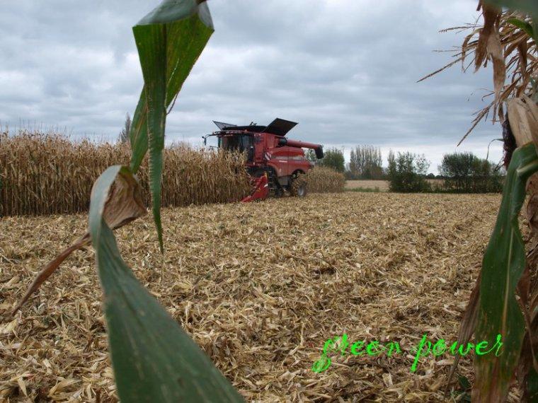 mais grain 2014 chantier 2