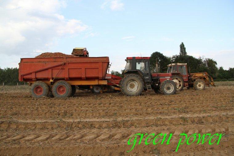 patates 2015 chantier 1