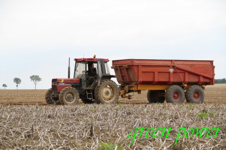 patates 2015 chantier 2