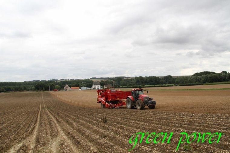 patates 2015 chantier 4