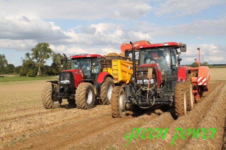 patates 2015 chantier 8