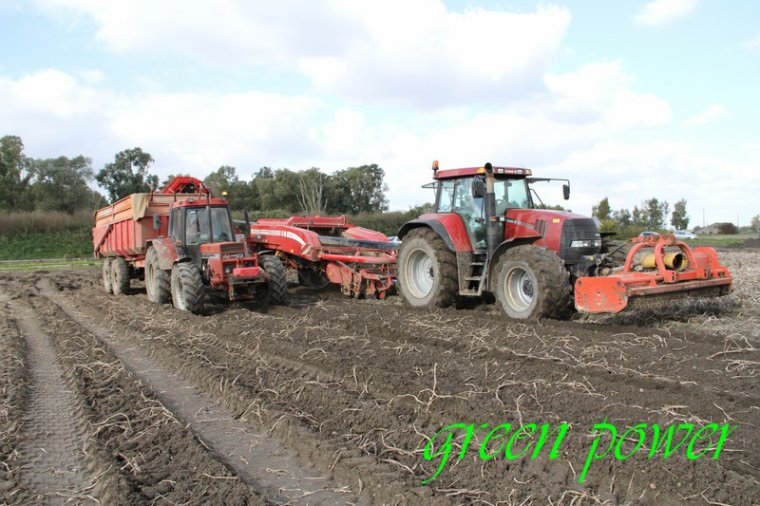 patates 2015 chantier 23