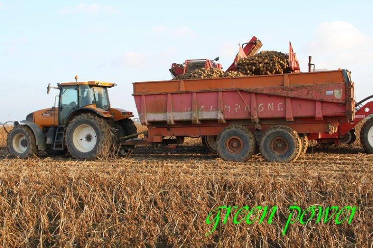 patates 2015 chantier 25