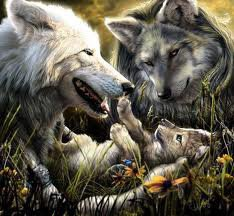 famille loups
