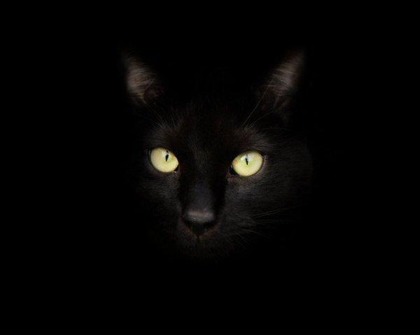 le chat temoignage