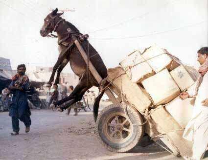 Quand je dis qu'il faut arreter de charger la mule !