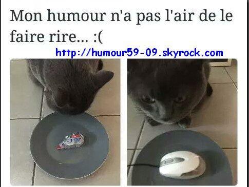 Pauvre chat ^^