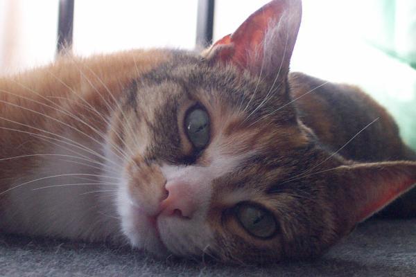 Charoline, Gueule-de-thon, Macaroni, Sergent Carpette, Tapis, Pussy-cat, Chat-teigne [ . . . ] Tous ces surnoms pour notre belle chatte : CAROLINE.