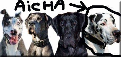 Aicha (l) :(