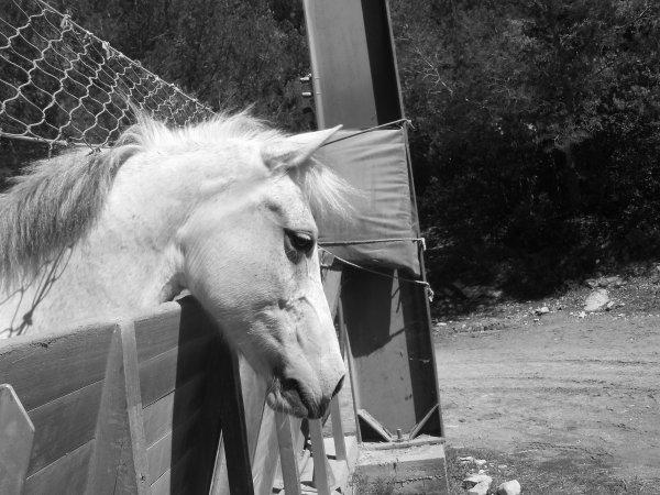 x Le cheval nous apprend ce qu'est la domination de soi. Pam Brown
