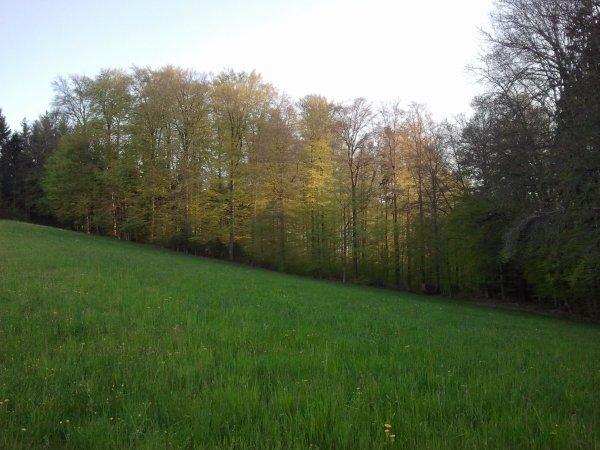 ptit paysage par chapelle