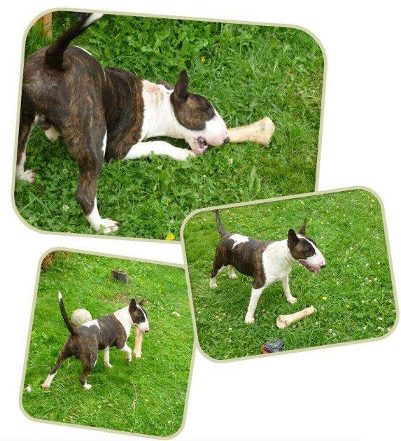 Heiz (8 mois) et son os :)