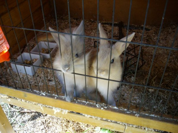 Les petits lapins de ma copine !!!!