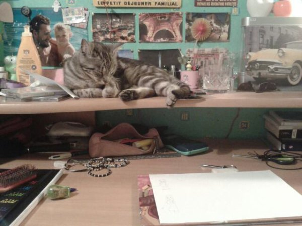 Mon cats :)