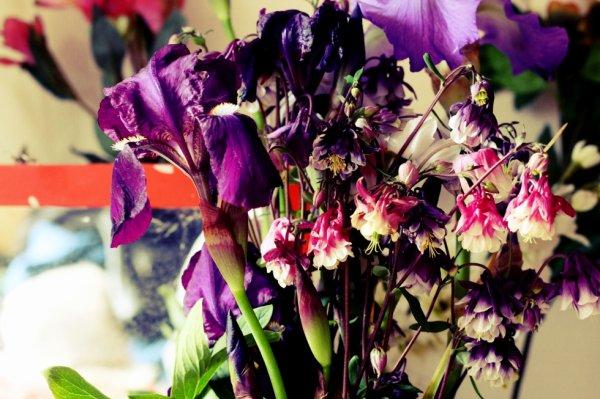 des fleurs et tout (2)