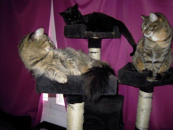 histoires de chats suite...