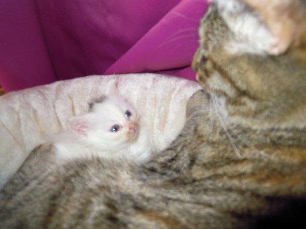 Un bébé du greffier de ma fille avec sa grand mère Angie qui retrouve son instinct maternel
