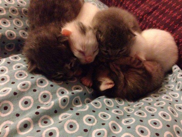 histoires de chats et chatounes
