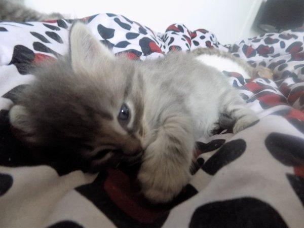 Un mois pour les chatons le 26 avril