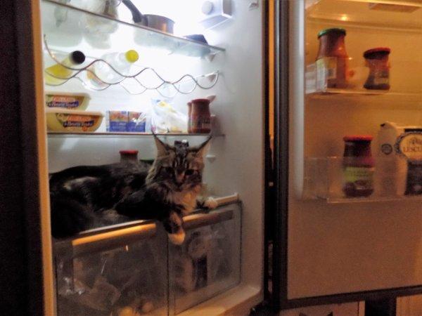 un chat au frais