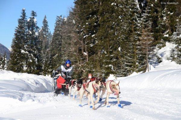 Alpentrail 2014