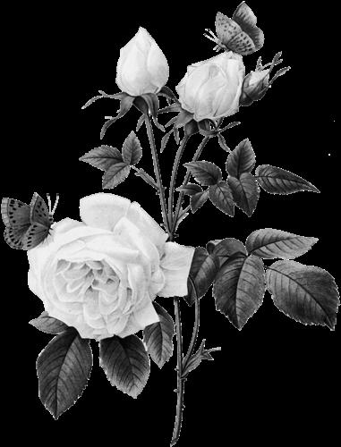 REPOSE EN PAIX MA CHERE ET ADORABLE SAIDA TU ES PARTIS SOUDAINEMENT SANS MEME NOUS PREVENIR TU RESTERAS A JAMAIS DANS NOS COEURS ON NE T'OUBLIERA JAMAIS QUE LES ANGES DE DIEU VEILLERONT SUR TOI GOD BLESS YOU MY DEAR SAIDA
