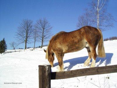 le             cheval  que        j'aime
