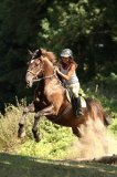 Photo de cheval-x76210
