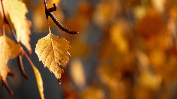 Couleurs d'automne <3