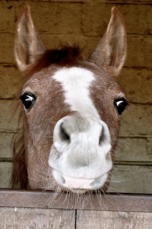 Baby horse <3