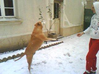 et hop un petit saut pour attraper une boule de neige .....