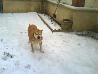 a du mal a ouvrir les yeux avec toute cette neige..... les yeux un peut fragile PACO?