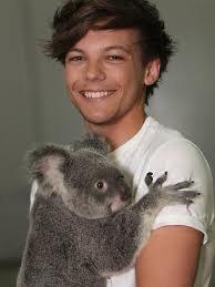 voici quelque photos des boy's avec des koala # tia