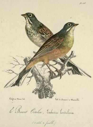 """""""La noce des oiseaux""""    poème de Jean Claude Brinette"""