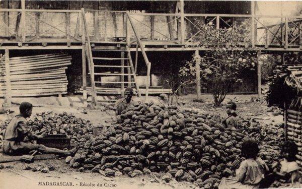 L'histoire fascinante du cacao