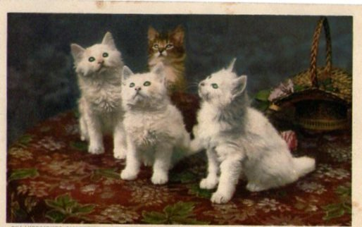 "Extrait de ma collection de cartes postales anciennes ""chats"""