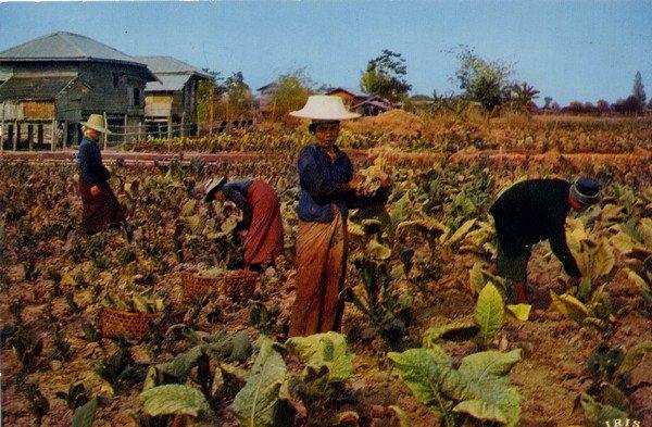 """Extrait de ma collection de cartes postales """"Ethnologie""""  Vie rurale"""